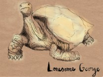 Lonesome George illustration